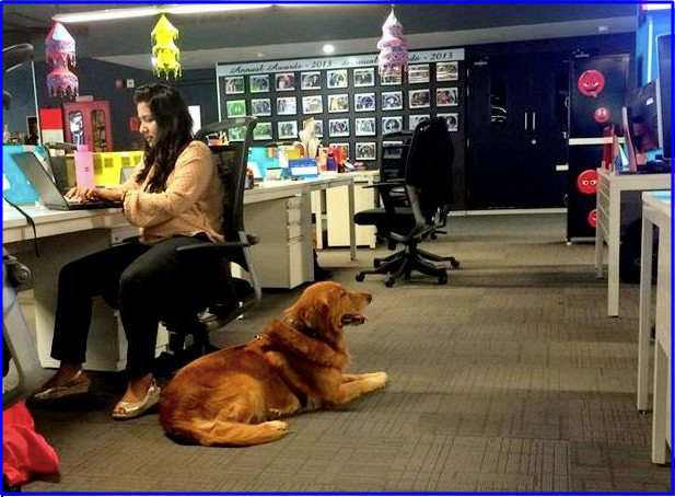 allow pets at work